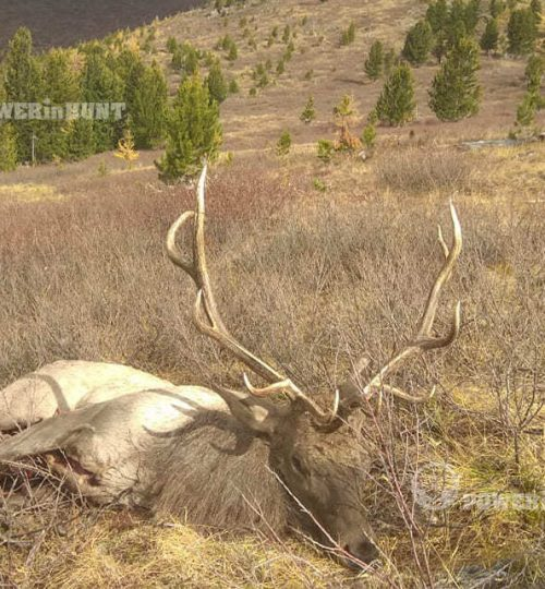Hunting in the Altai - foto 7